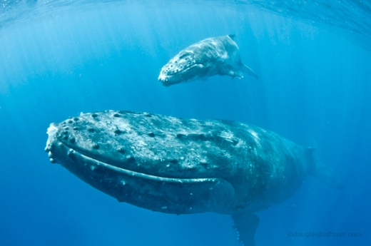 whales09.1