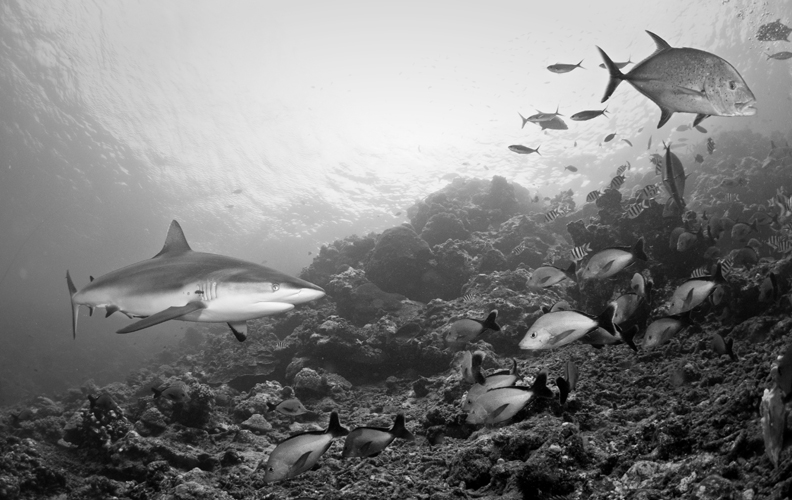 Cruising the reef.