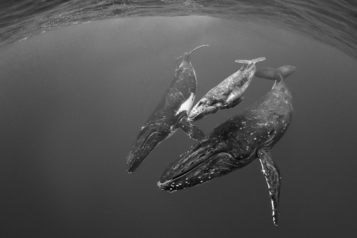 Beautiful Humpback whales!
