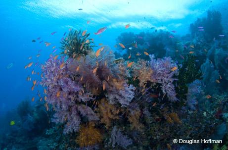 Great diving, wonderful people, incredible food.