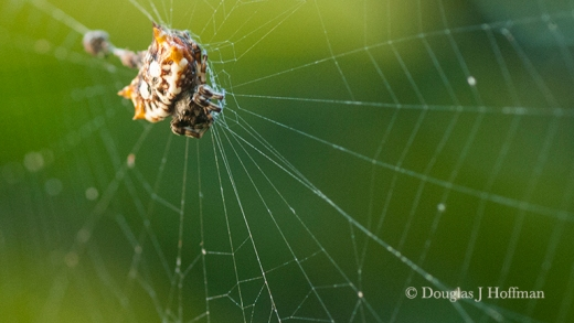 This spider was in a web just above where I was sitting