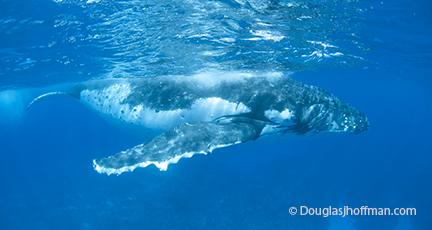 Female whale enjoying quality time alone