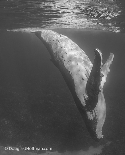 Incredible show beneath the sea