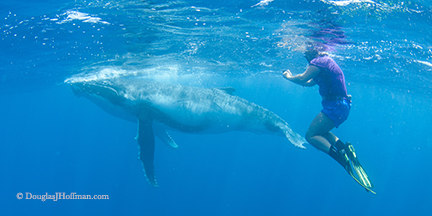 Whale swimmer having time of her life