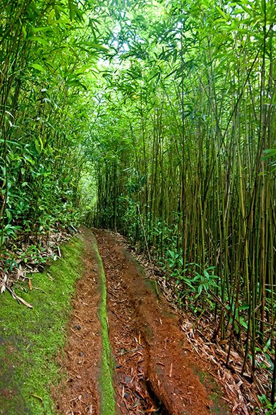 003_Bamboo Forest_1.1