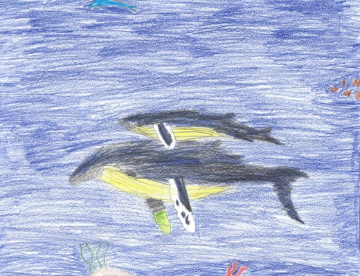 Whale Art from Children at Maui schools