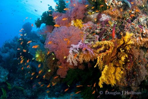 Color beneath the Sea.web